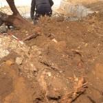 חפירת תעלה,וחיתוך שורשי השקד