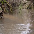 image flooding_35-jpg