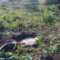 image planting2006_01-jpg