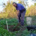 image planting2006_05-jpg