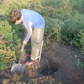 image planting2006_08-jpg