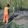 image planting2006_13-jpg