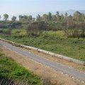image planting2006_16-jpg