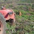 image planting2006_22-jpg