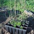 image planting2006_35-jpg