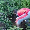 image planting2006_38-jpg