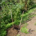 image planting2006_45-jpg