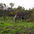 image planting2006_52-jpg