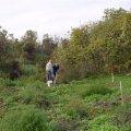 image planting2006_57-jpg