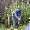 image planting2006_58-jpg