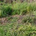 image planting2006_63-jpg