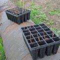 image planting2006_64-jpg