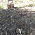 image planting2010_22-jpg